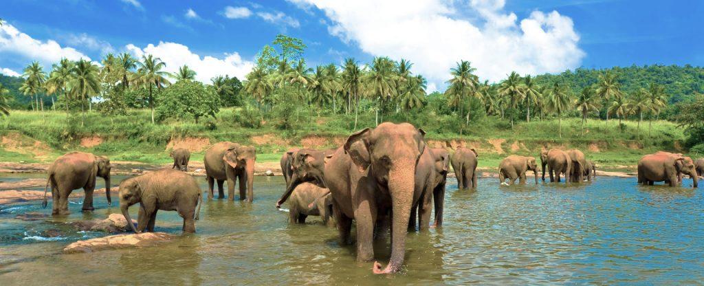 Intrepid Circle Sri Lanka Tour